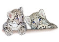 Snow leopard babies uncia uncia cubs Royalty Free Stock Photography