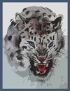 Snow leopard with an open mouth the is roaring Royalty Free Stock Images
