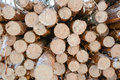 Snow log stack lumber in winter. Royalty Free Stock Photo