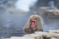 Snow monkey taking bath with hot spring water,