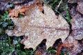 Snow on Oak Leaf Royalty Free Stock Photo
