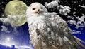 Snow owl and night sky