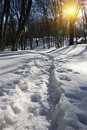 Snow path Royalty Free Stock Image