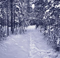 Snow path in winter forest Royalty Free Stock Image