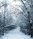 Snow path in winter forest Royalty Free Stock Images