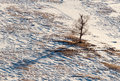 Snow pattern tree seasonal nature winter image mountain landscape with dark silhouette at a snowy mountain descent slope field Stock Photography