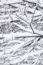 Snow Patterns on Trees Royalty Free Stock Photo