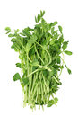 Snow Pea Sprouts Royalty Free Stock Images
