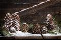 Snow Pinecones