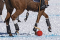 Snow polo Royalty Free Stock Photo