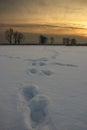 Snow prints Royalty Free Stock Photo