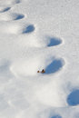Snow prints wind blown random drifted footprints Stock Photography