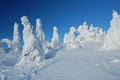 Snow sculptures winter snowy from trees on top of the mountain Stock Photo