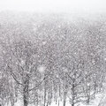 Snow storm over forest in winter Royalty Free Stock Photo