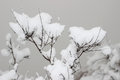 The snow thick on chaste tree Stock Photos