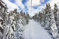 Snow on trees on ski slope italy in the forest covered italian alps Stock Photos