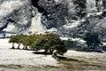 Snow view of tibetan village at Shangri-la China Royalty Free Stock Photo