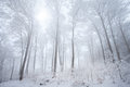 Snow in the winter forest Royalty Free Stock Photography