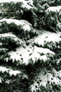 Snowbound branch Royalty Free Stock Photography