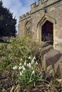 Snowdrops in churchyard galanthus nivalis st george priory church dunster somerset Royalty Free Stock Images