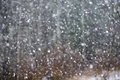 Snowfall. Image of snow blizzard. Royalty Free Stock Photo