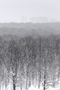 Snowfall over city park forest in winter Royalty Free Stock Photo
