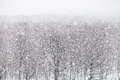 Snowfall over forest in winter day Royalty Free Stock Photo