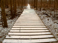 Snowfall over Hiking Boardwalk Royalty Free Stock Image