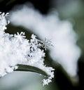 Snowflake / Hópihe