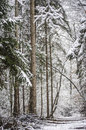 Snowing in a forest Stock Images