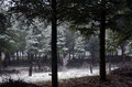 Snowing upon forest in winter Royalty Free Stock Photography