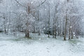 Snowing snow falling on ground in the forest Royalty Free Stock Photography