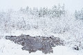 Snowing vector of winter scene with river and forest background Stock Image