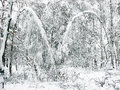 Snowing winter landscape with lot of snow. Royalty Free Stock Photo