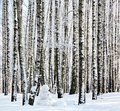 Snowman in winter birch forest cold weather Stock Photography
