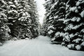Snowmobile trail a in northern michigan that runs through a forest of evergreen trees Stock Photography