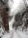 Snowscape lane cut through the landscape with tracks photographed at crediton in devon Stock Photo