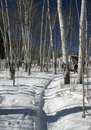 Snowshoe hiker, shadows of aspens,, Royalty Free Stock Images