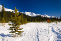 Snowshoe Trails Royalty Free Stock Photography
