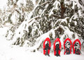 Snowshoes in the forest. Royalty Free Stock Photo