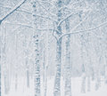 Snowstorm in city park christmas background Stock Image