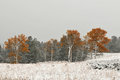 Snowstorm in yellowstone national park fall Stock Photos