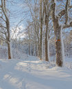 Snowy alley of trees a sunny winter day Royalty Free Stock Photo