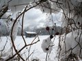 snowy barn Royalty Free Stock Photo