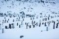 The Snowy Cemetery