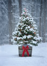 Snowy Christmas Tree with Colorful Lights in a Forest Royalty Free Stock Photo