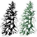 Snowy Coniferous Tree Royalty Free Stock Photo