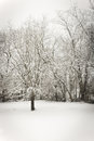 Snowy day trees covered with snow in an outdoor scene Royalty Free Stock Photo