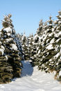 Snowy Evergreen Path Stock Photos