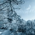 Snowy forest in december under moonlight Royalty Free Stock Image
